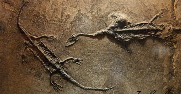 О динозаврах и окаменелостях.