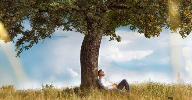 Человек - дерево полевое