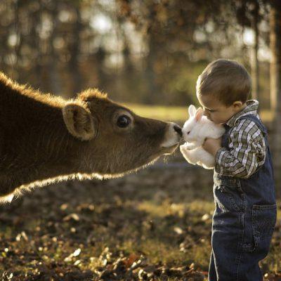 Запрет на употребление в пищу мяса, взятого у живого животного