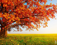 Почему мир был сотворен именно осенью?