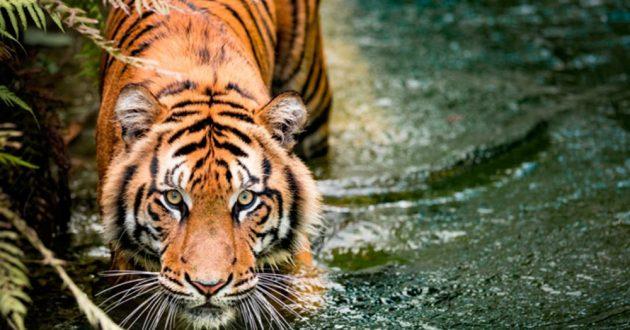 У каких животных можно научиться и чему?